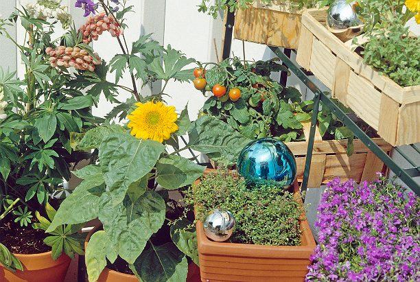 Выращиваем овощи прямо на балконе!