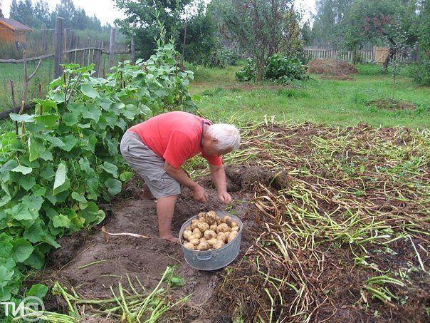 Интересный метод выращивания овощей