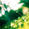Горькие лекари: Травы для очищения и правильного пищеварения