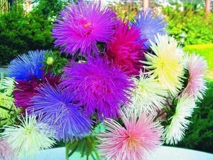 цветы осени 13 (700x524, 470Kb)