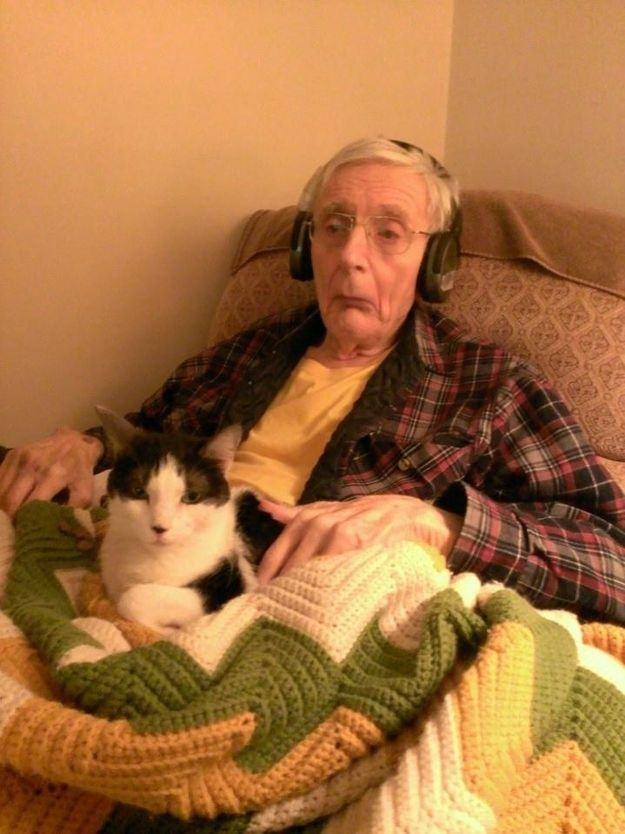 CatsGoldenHearts26 Почему мы любим кошек