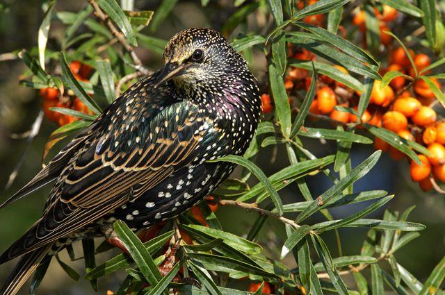 Новые решения. Как защитить урожай от птиц?