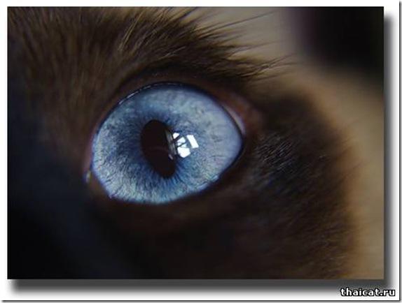 Почему у кота слезятся глаза мои домашние питомцы