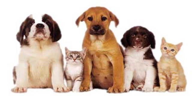 Pet Adoption - Choosing the Right Pet for Your Family