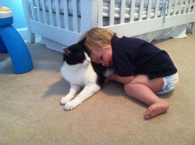 CatsGoldenHearts14 Почему мы любим кошек