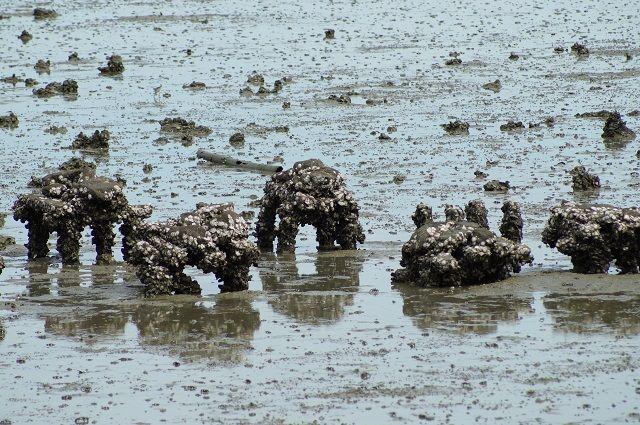 В Крыму вырастили рекордные 100 тонн устриц