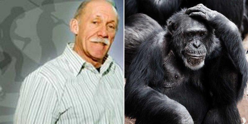 Как в США родился гибрид человека и шимпанзе, которого убили запаниковавшие учёные животные, люди, наука, обезьяна, ученые, шимпанзе