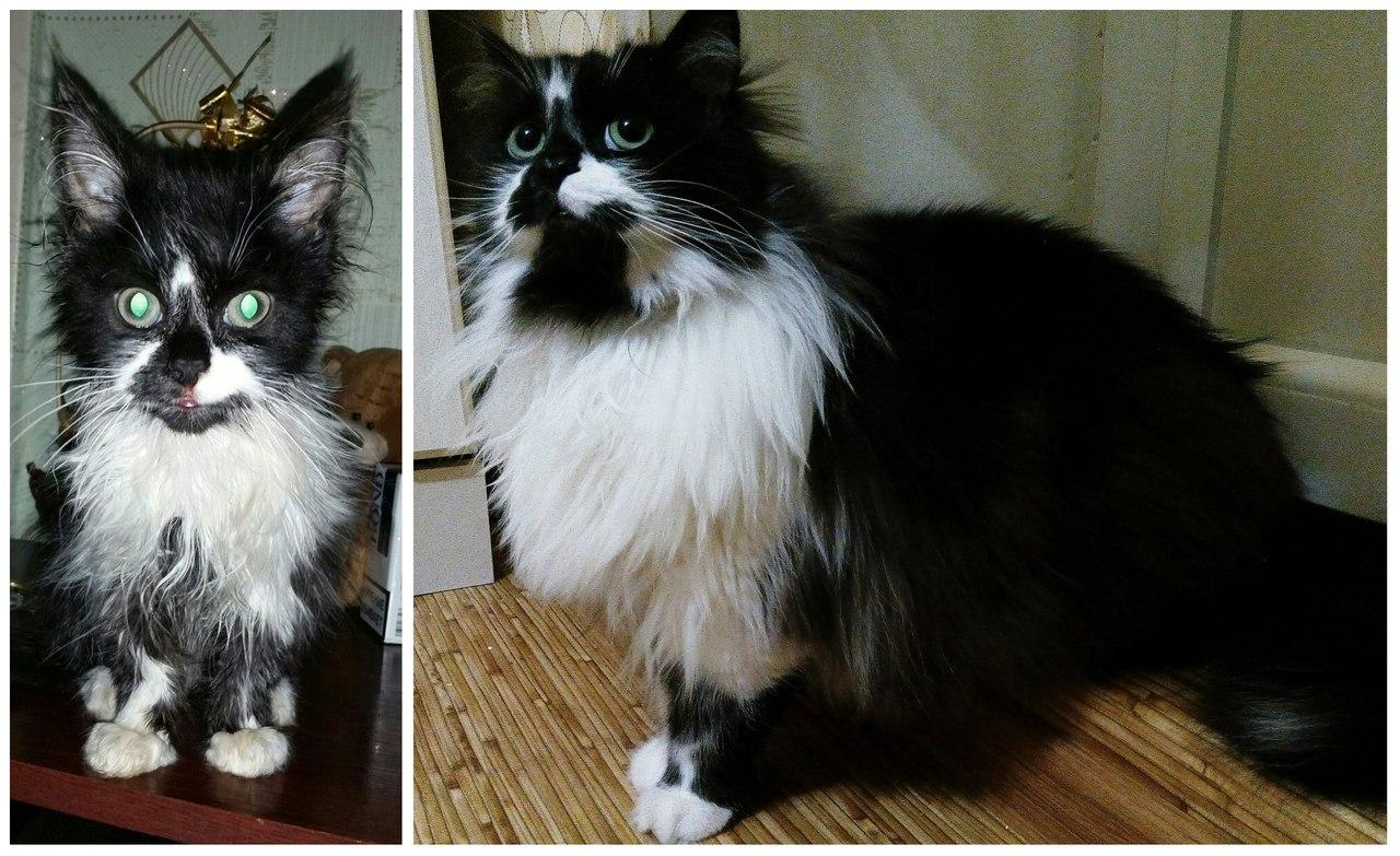 До и После: Ричард