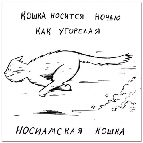Определяем породу кошки по её характеру (9 фото)