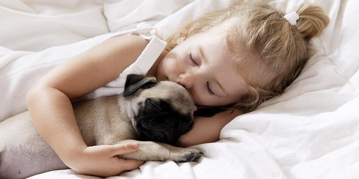 Из первых уст - чему собака …
