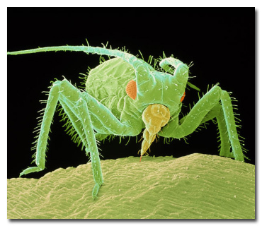 11 жутких чудовищ, которых без микроскопа не разглядеть