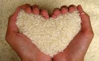Польза риса: вдохновляемся, насыщаемся и оздоравливаемся