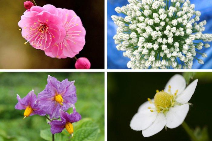 Как во время цветения выглядит наша пища!
