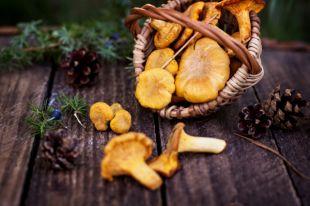 С картошкой, абрикосами и креветками. 10 фантастических блюд из лисичек