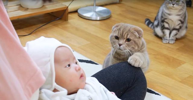 Хозяйка показала котам новорожденного ребенка