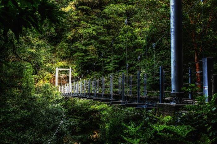 Сказочные леса острова Якусима