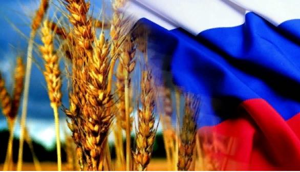 США увидели угрозу в урожае пшеницы России