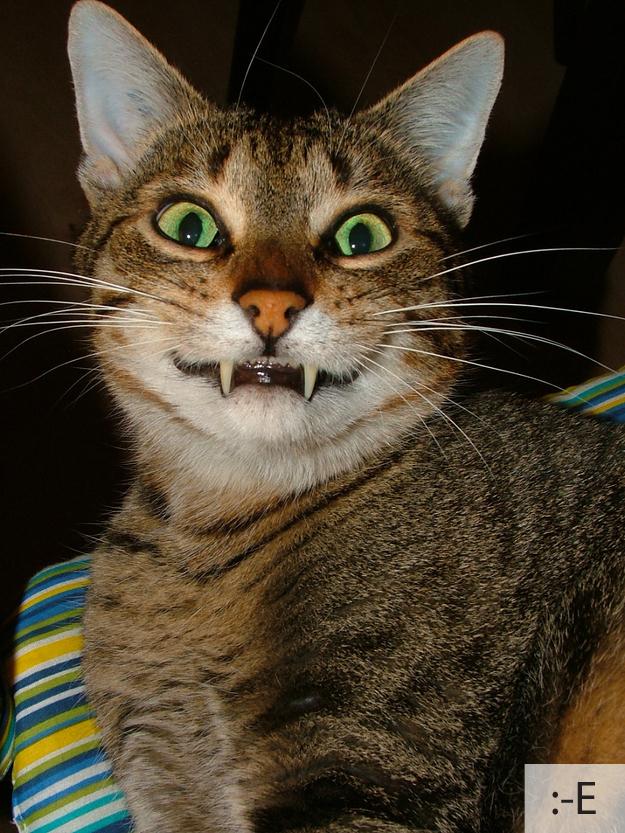 catsmiles 22 Кошачьи смайлики