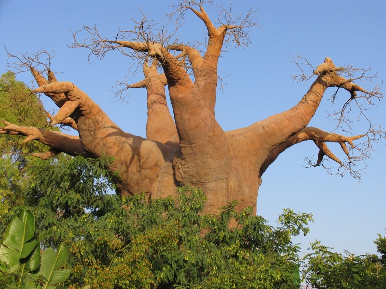 http://respekt.crimea.ua/uploads/content/images/madagascar-baobab-tree(1).jpg