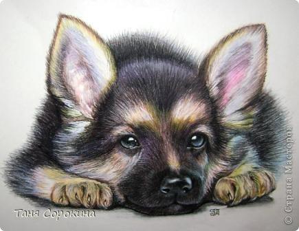 Картина панно рисунок Рисование и живопись Тренируюсь на щенках  Пастель фото 1