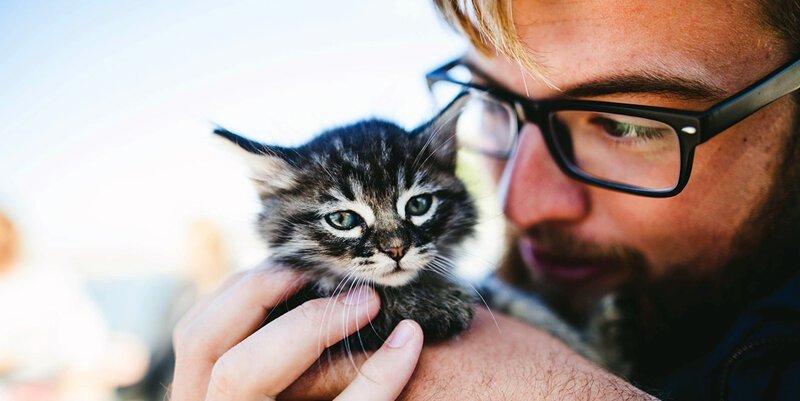«Мой котенок сводит меня с у…
