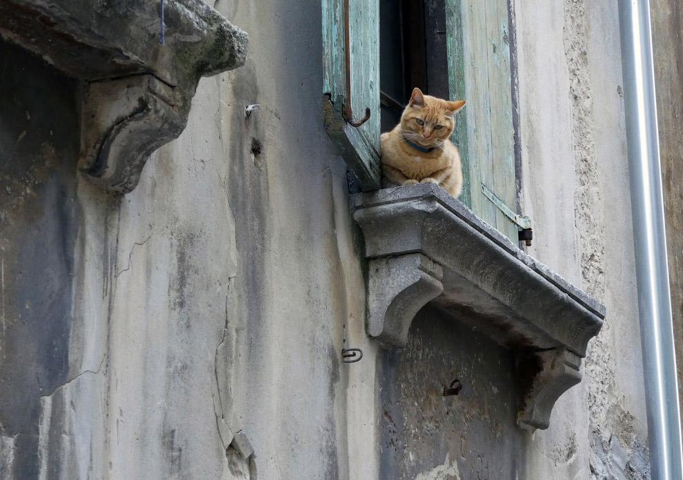 Коты Ровиня
