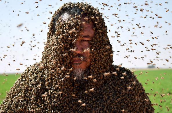 Пчела сорвала попытку установить мировой рекорд