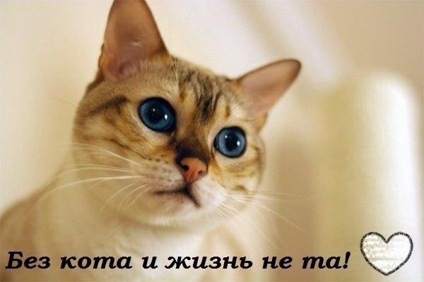 Без кота и жизнь не та!)