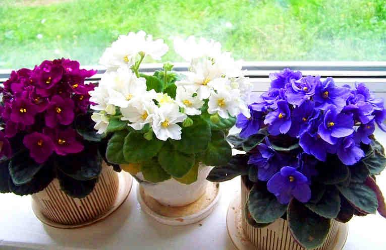 Три простых трюка для здоровья и красоты комнатных растений. Они оживут и зацветут