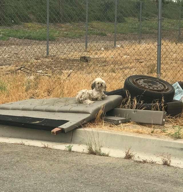 От жары асфальт плавился, а пёс сидел на обочине… Оказалось, что не он один попал в беду!