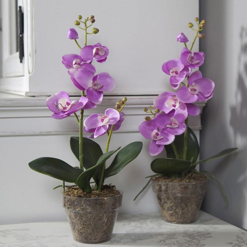если корни орхидеи