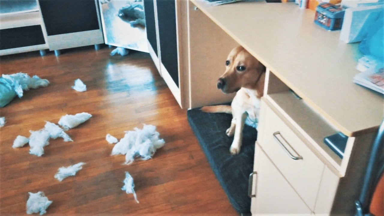 Что, если Собаки остались одни дома?