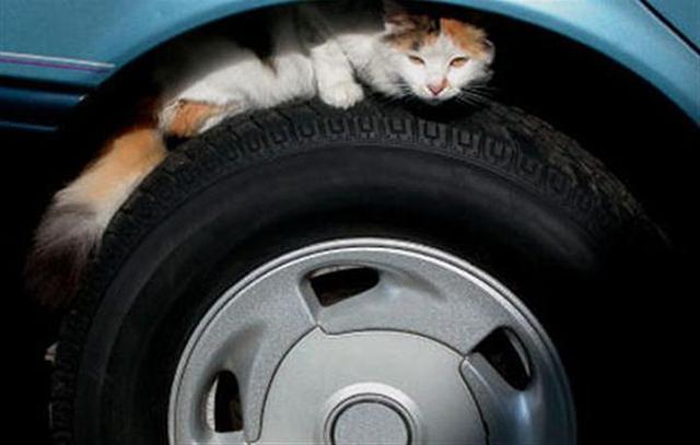 Осторожно, кот!