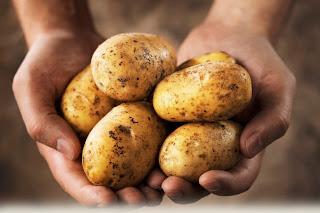 Картофель дробит камни в почках