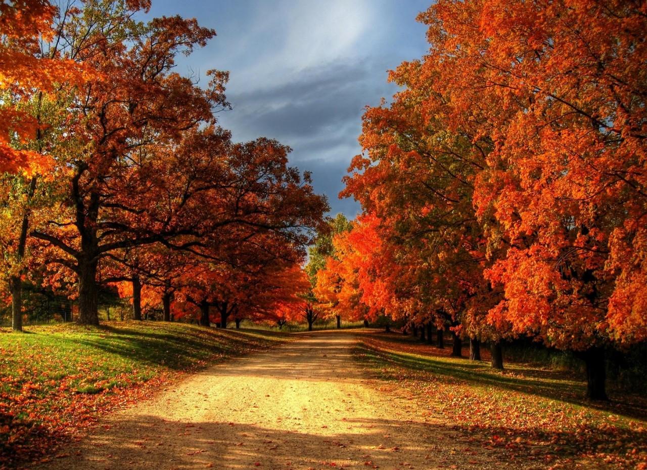 Картинки по запросу autumn real