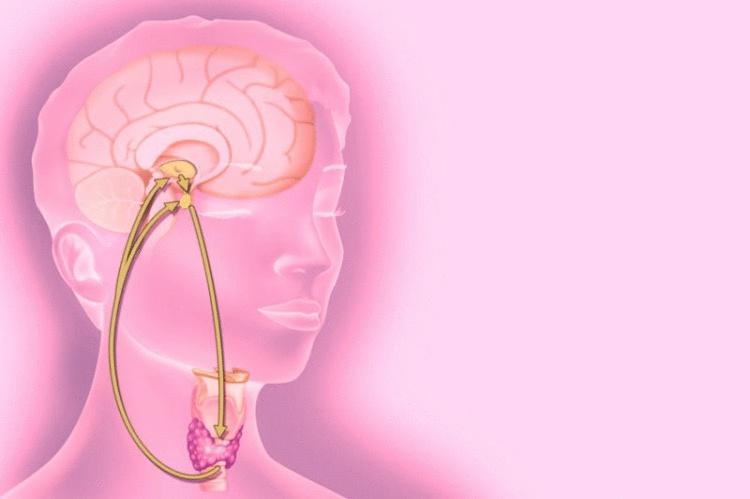 Как определить, какого гормона не хватает в организме?