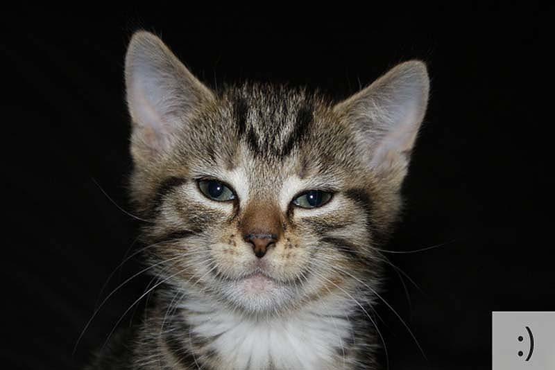 catsmiles 1 Кошачьи смайлики