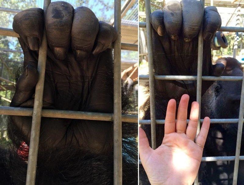 18 объектов и живых существ, реальные размеры которых мы явно недооцениваем