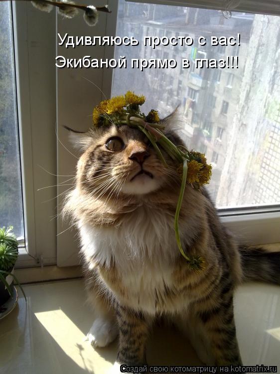 "ПЯТНИЧНАЯ ""КОТОМАТРИЦА...(кошачья)"