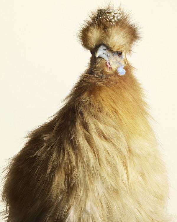 Гламурные курицы