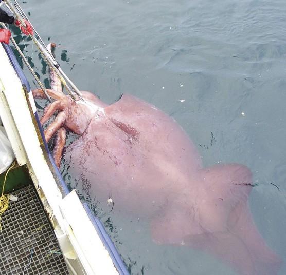 гиганты из мира природы 8 На снимках: гиганты из мира природы   самые крупные животные в мире!