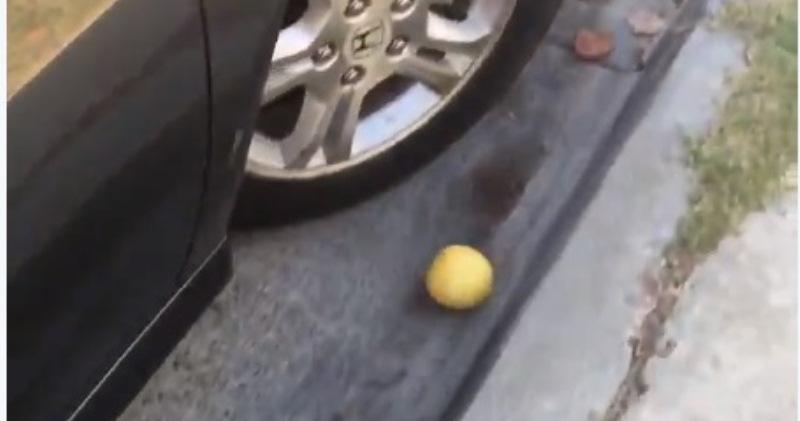 О боже, только не останавливайся: видео, где лимон катится с горы, преодолевая препятствия, взорвало твиттер