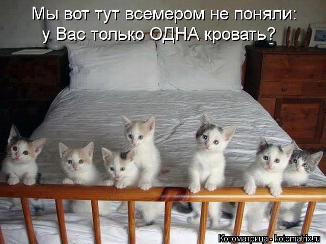 Котоматрица: Мы вот тут всемером не поняли: у Вас только ОДНА кровать?