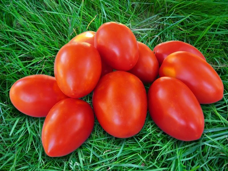 "yur4046 - альбом ""Мои томаты / Мои томаты. Фото прошлых лет"" на Яндекс.Фотках"