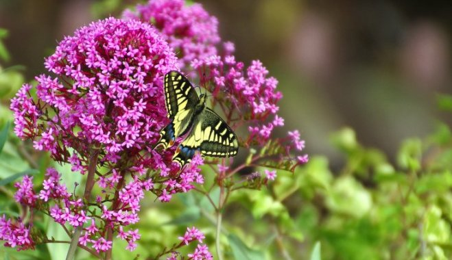 7 лучших кустарников, цветущих поздним летом
