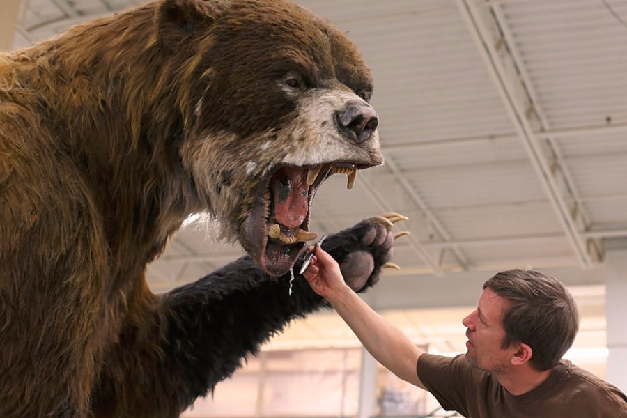 Гигантский короткомордый медведь — ужас ледникового периода