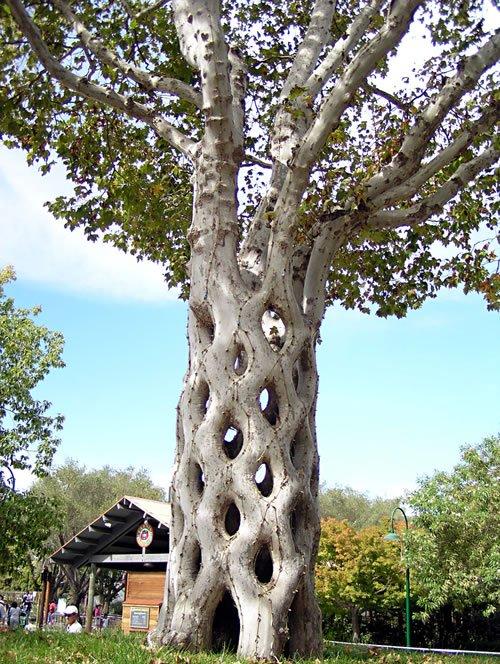 Деревья, которые удивляют