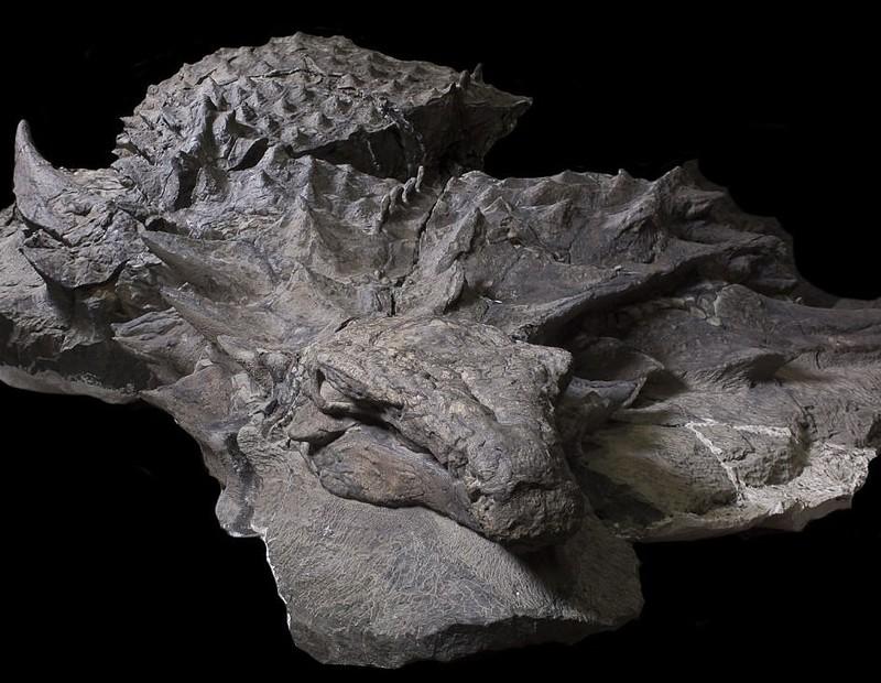 Эта 110-миллионолетняя окаменелость динозавра выглядит как статуя