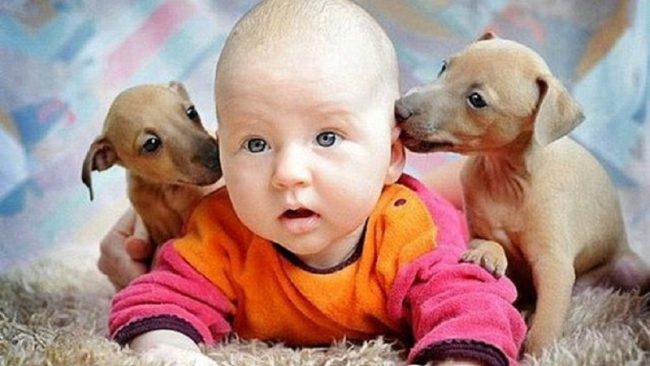 Несколько позитивных фотографий детей и животных