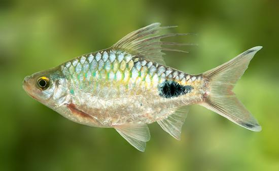 10 видов животных, названных…